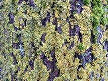 Schönes grünes Moos auf Baumstamm, Litauen Lizenzfreies Stockfoto