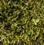 Schönes grünes Moos im Waldabschluß oben Das Moos w?chst auf einem Baum Der Platz f?r den Text Ein Blatt auf dem Moos lizenzfreies stockbild
