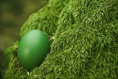 Schönes grünes Osterei Lizenzfreies Stockfoto