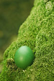 Schönes grünes Osterei Stockbilder