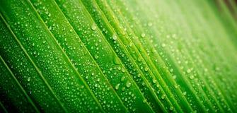 Schönes grünes tropisches Palmblatt mit Wassertropfen Stockfotografie