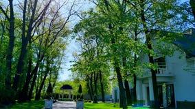 Schönes grünes Yard mit Bäumen um das Haus stock footage