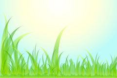 Schönes Gras des Blumenhintergrundes. Lizenzfreie Stockfotos