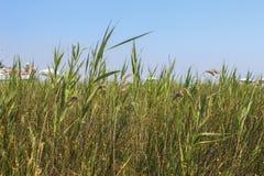 Schönes Gras hinter dem Strand voll von Leuten Lizenzfreie Stockfotografie
