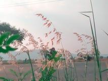 Schönes Grasblumenfeld, abstrakter träumerischer Blumenhintergrund, Sonnenlicht, Weichzeichnung, Frühlings-Saison stockfoto