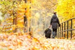 Schönes großes Neufundland mit dem Inhaber auf einem Herbstweg in a stockbild
