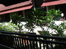 Schönes Haus Balis morgens Stockbild