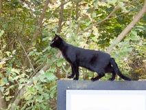 Schönes Haustier der schwarzen Katze stand auf Zeichen draußen seitlich Stockfotografie