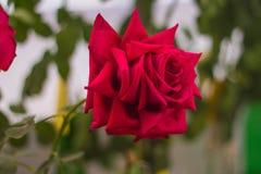 Schönes helles der frischen Blume stockbild