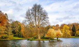 Schönes Herbstbaum scape mit Blättern des Goldes, braun, gelb und orange stockfoto