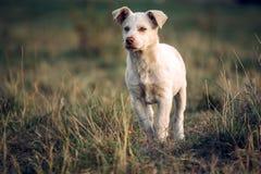 Schönes Hundeportrait stockfotos