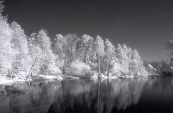 Schönes Infrarotfoto der weißen Sommerbäume mit reflaction Stockbilder