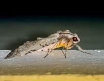 Schönes Insekt in der Nacht Stockfoto