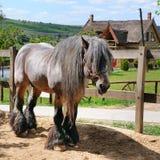 Schönes irisches Pferd in einem Vogelhaus auf einer Ranch stockfoto