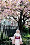 Schönes japanisches Mädchen, das bunten Kimono trägt Lizenzfreie Stockfotos