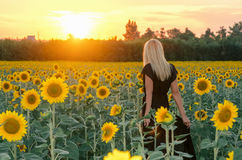 Schönes junges blondes Modell im schwarzen Kleid auf einem Feld von Sonnenblumen Lizenzfreies Stockfoto