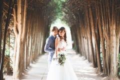 Schönes junges Hochzeitspaar ist, lächelnd küssend und im Park lizenzfreie stockbilder