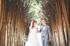 Schönes junges Hochzeitspaar ist, lächelnd küssend und im Park lizenzfreies stockbild