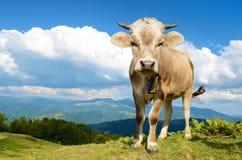 Schönes junges Kalb in den Bergen auf dem Hintergrund der Wolke Stockfotografie