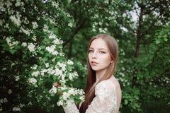 Schönes junges Mädchen in einer blühenden Flieder Lizenzfreies Stockbild