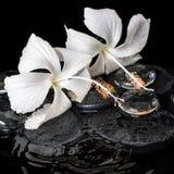 Schönes kälteerzeugendes Badekurortkonzept des empfindlichen weißen Hibiscus, Zen Stockbild