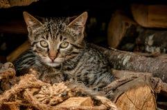 Schönes Kätzchen auf hölzernen Klotz und Seilen Lizenzfreie Stockfotos