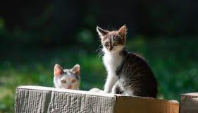 Schönes Kätzchen, das auf einem Kasten mit einem unscharfen grünen Hintergrundkontrast sitzt Stockfoto