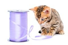 Schönes Kätzchen und eine Spule des Seils stockfotos