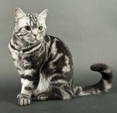Schönes Katzesitzen Stockfotos