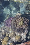 Schönes koral Stockfotografie