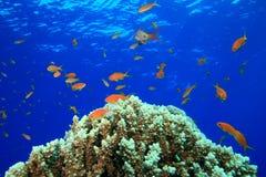 Schönes Korallenriff Stockfotos