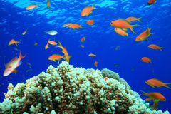 Schönes Korallenriff Lizenzfreie Stockbilder
