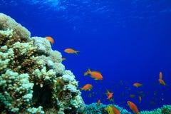 Schönes Korallenriff Stockbilder