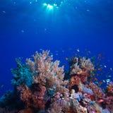 Schönes Korallenriff der Unterwasserlandschaft voll der bunten Fische lizenzfreies stockbild