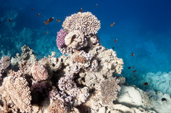 Schönes Korallenriff nahe der Dahab Stadt von Ägypten Lizenzfreies Stockbild