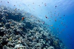 Schönes Korallenriff nahe der Dahab Stadt von Ägypten Stockfotografie