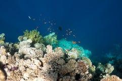 Schönes Korallenriff nahe der Dahab Stadt von Ägypten Stockbild