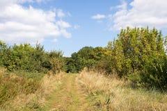 Schönes Landschaft-, Grünes und Gelbesgras, Wiese, Straße Stockfotos