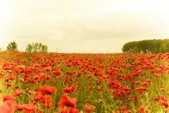 Schönes Landschaftsbild des Sommermohnblumenfeldes mit Retro- Effekt Lizenzfreies Stockfoto
