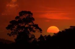 Schönes Landschaftsbild mit Baumschattenbild bei Sonnenuntergang Lizenzfreie Stockfotografie