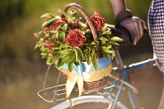 Schönes Landschaftsbild mit Fahrrad Stockfoto
