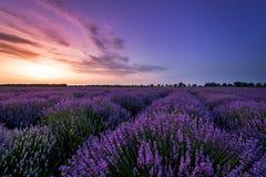 Schönes Lavendelfeld auf Sonnenuntergang Lizenzfreie Stockfotografie