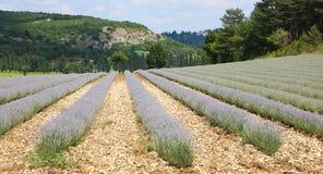 Schönes Lavendelfeld nahe dem Dorf von Sault Provence France lizenzfreies stockbild