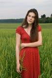 Schönes Mädchen auf dem grünen Weizengebiet Stockfoto