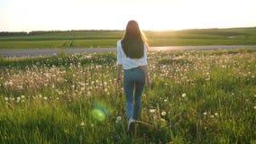 Schönes Mädchen, das auf das Feld mit Löwenzahn geht stock video footage