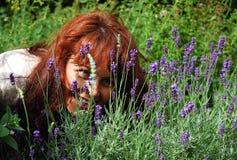 Schönes Mädchen, das Blumen betrachtet Stockfotografie