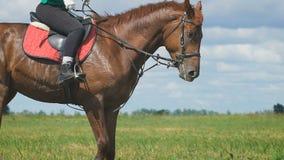Schönes Mädchen, das ein Pferd in der Landschaft reitet stock video footage
