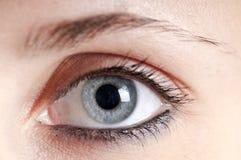 Schönes Mädchen des blauen Auges Stockfotos