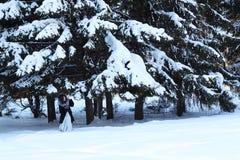 Schönes Mädchen im Pelzmantel versteckt sich unter großen schneebedeckten Fichten Stockbild