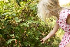 Schönes Mädchen mit Blackberry im Garten Lizenzfreie Stockfotos